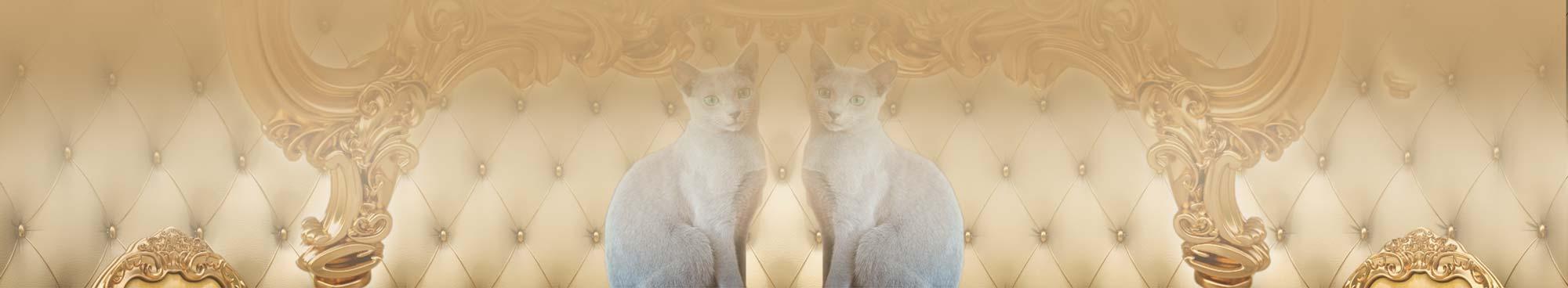 Carski Kot*PL – Hodowla Kotów Rosyjskich Niebieskich