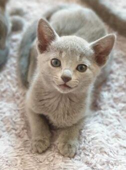 carski Kot